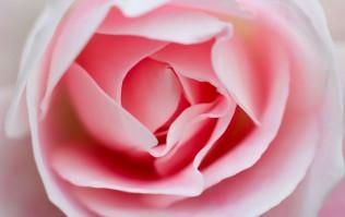 Rose audio 1 11312250_l